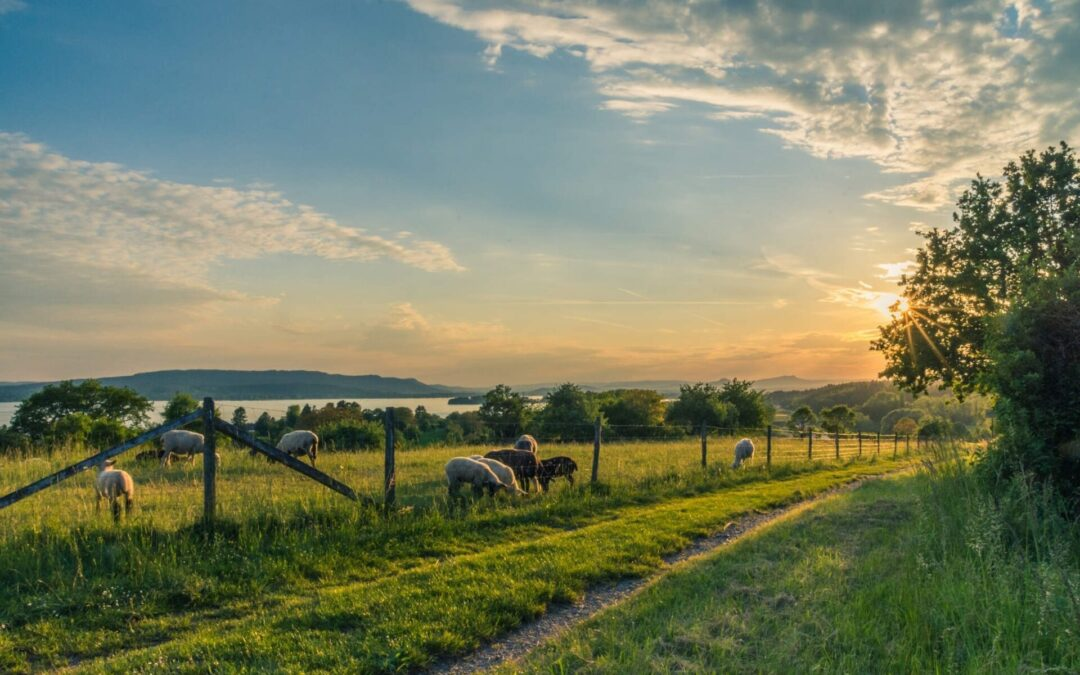 Looking to Relocate To The Countryside? Practical Things You Need To Know Before Moving To A More Rural Location